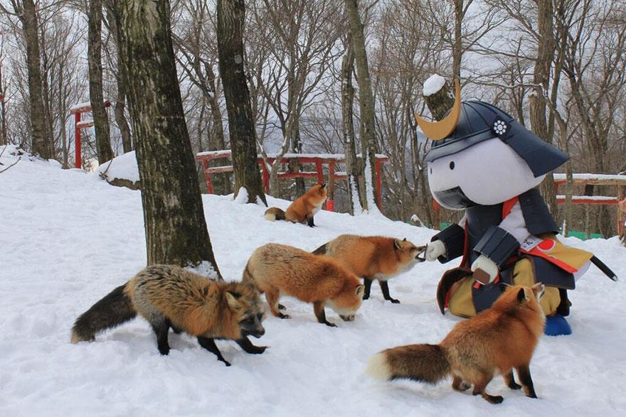 หมู่บ้านสุนัขจิ้งจอก หมาป่า5