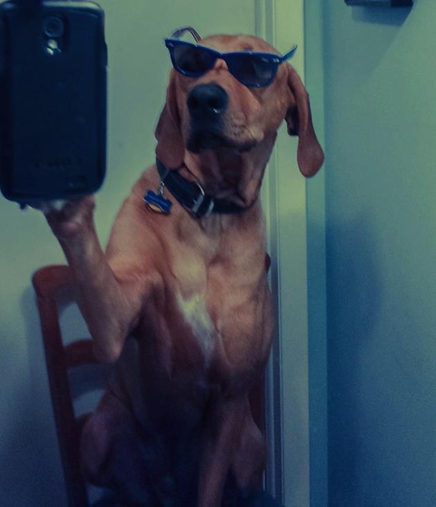 ภาพของสุนัขที่เลียนแบบมนุษย์ได้เหมือนสุด12