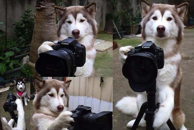 ภาพของสุนัขที่เลียนแบบมนุษย์ได้เหมือนสุด17