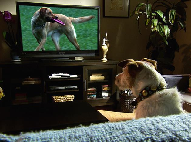 ภาพของสุนัขที่เลียนแบบมนุษย์ได้เหมือนสุด2