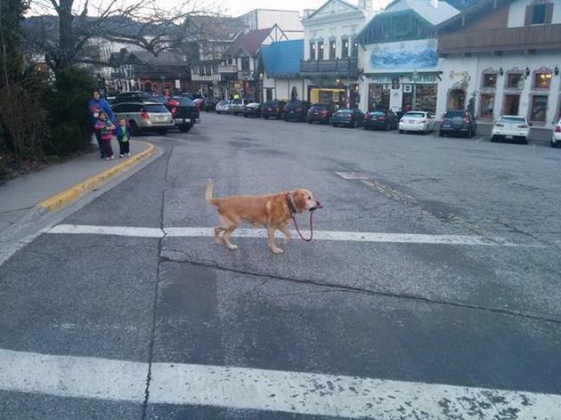 ภาพของสุนัขที่เลียนแบบมนุษย์ได้เหมือนสุด4