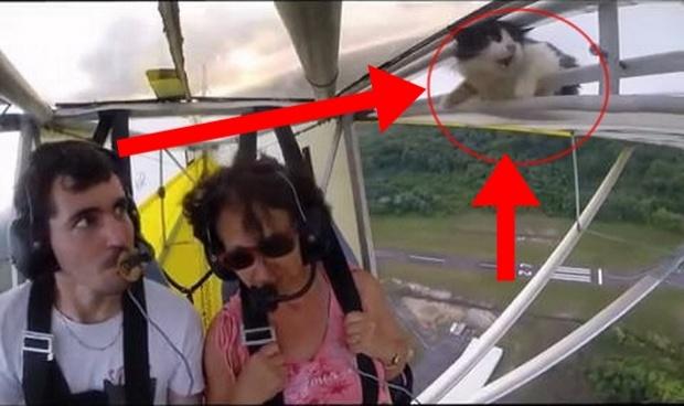 แมวนั้งเครื่องบิน